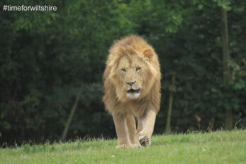 Longleat (image courtesy of Visit Wiltshire)